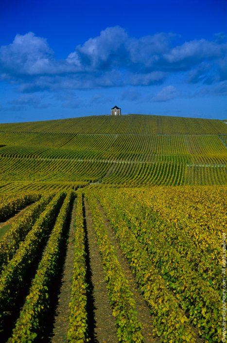 Photographe vignoble champagne viticole Bruno Gouhoury