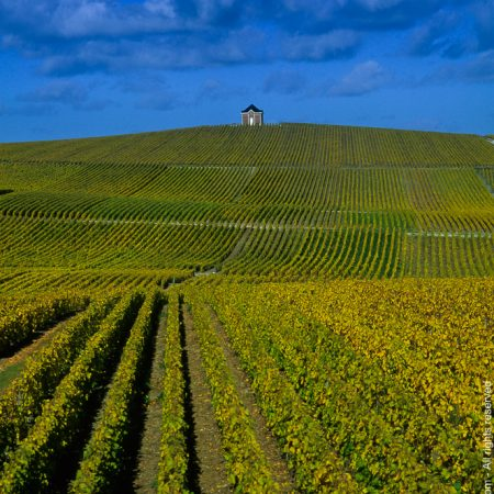 photographe-agriculture-viticulture-champagne